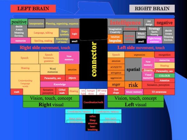 Left_and_Right_Brain